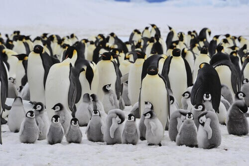 Emperor penguins are some of the wildlife of Antarctica.