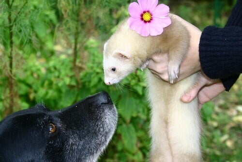 A ferret and a dog.