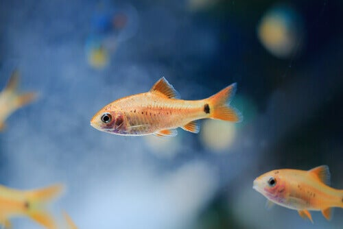 Fish swimming in water.