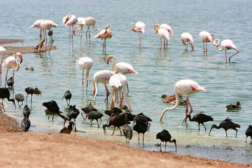 Some facts about flamingos are that their coloring comes from their food.