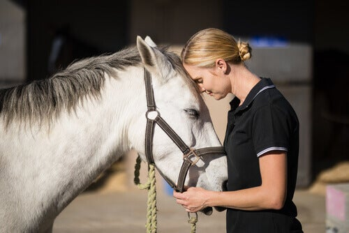Taming a horse requires the animal's trust.