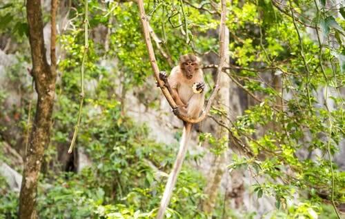A monkey in a tree.