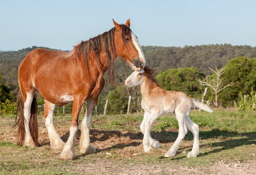 A mare with her foal.