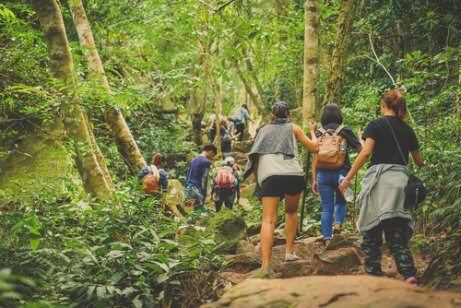 A group of people hiking in the forests.