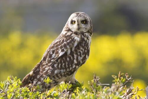 A photo of a curious owl.