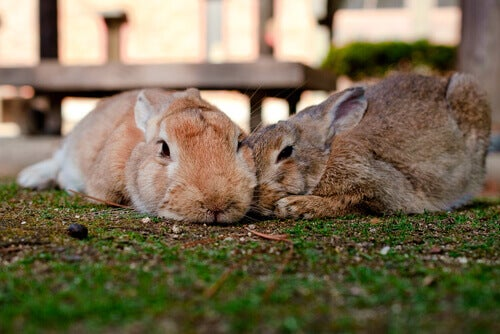 How To Get Rid of Parasites in Rabbits