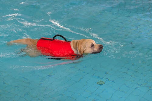 There are many different types of pet rehabilitation exercises.