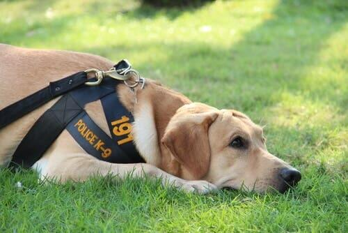 Police Dog Agent: A Canine Officer's Life and Training
