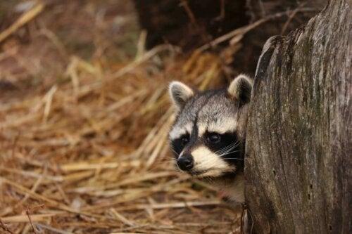 What Are Invasive Species?