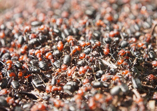A close-up of an ant colony.