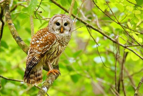 Meet 4 Interesting and Beautiful Species of Owl