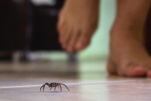 A spider walking on the floor.
