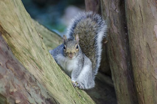 Types of Squirrels and Their Characteristics