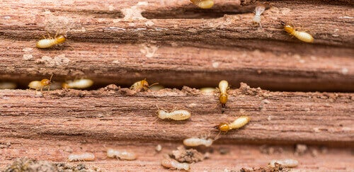 All About the Destructive Power of Termites