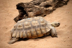 Turtles as a cultural symbol can represent movement and creation.