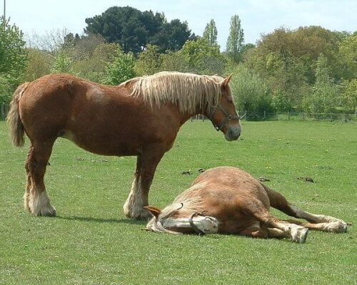Two horses in a field.