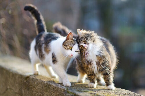 Two outdoor cats on a wall.
