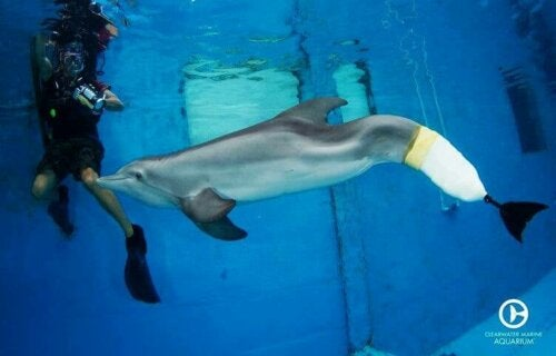 Winter The Dolphin: The Dolphin that Lost Her Fin