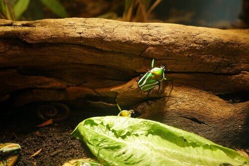 A bug in a terrarium.