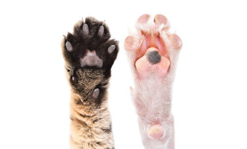 Interesting Facts about Animal Paw Pads