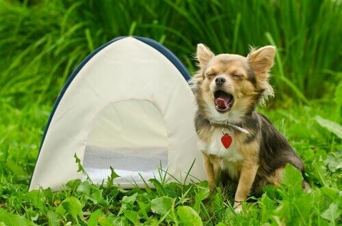 Camping with your dog is a great summer activity.