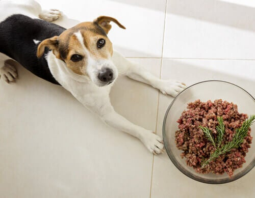 Are Dogs Naturally Carnivorous?