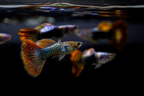 The Importance of the pH of an Aquarium