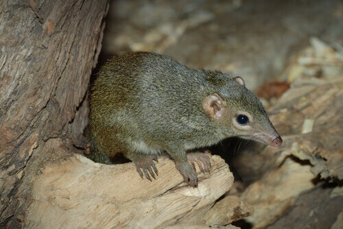 A shrew perched on a fallen branch.