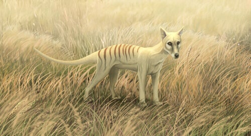 A fictional Tasmanian tiger.