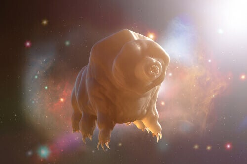 A tardigrade floating in space.