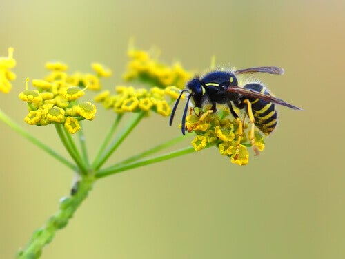 A wasp on a flower.