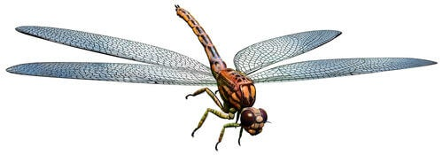 One of the many giant insects that once roamed the Earth.