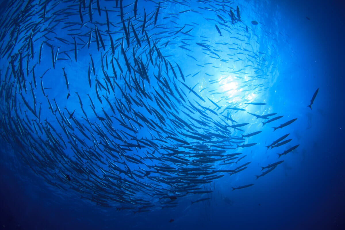 A school of fish in the ocean.