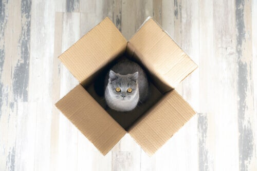 A cat playing in a box.