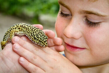 The Common Leopard Gecko Is the Ideal Pet