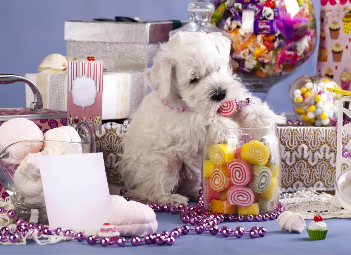 A dog surrounded by candy.