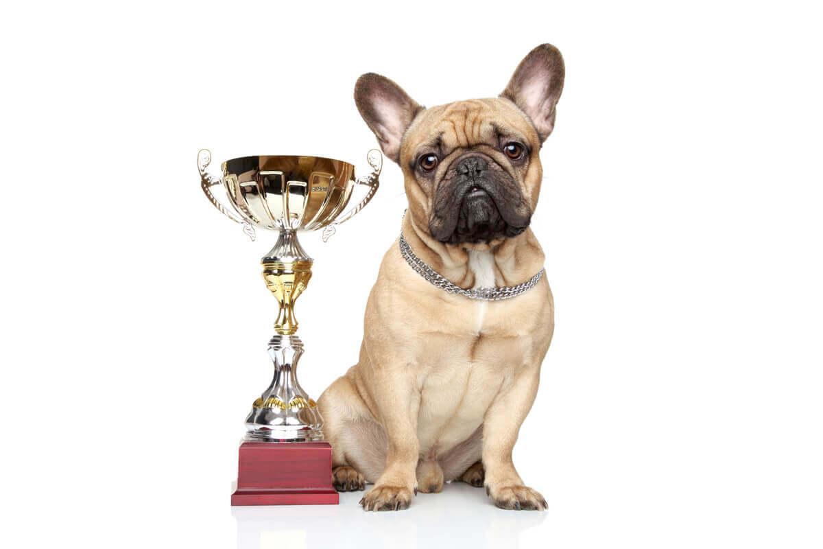 The Animal Welfare Awards.