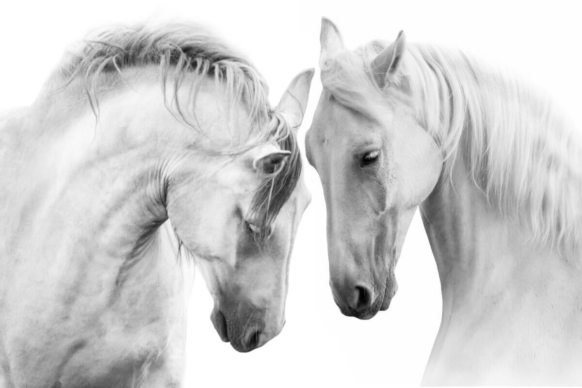 Two horses touching heads.