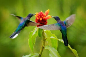 Smaller animals such as hummingbirds perceive the passage of time differently to humans.