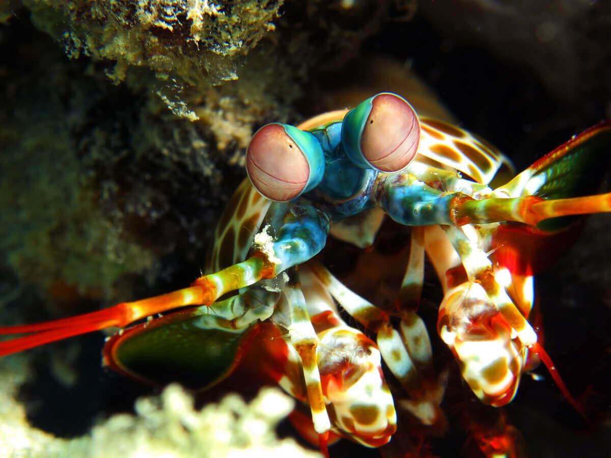 The face of a mantis shrimp.