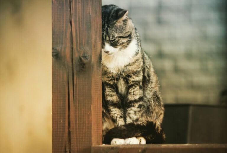 Three Mental Illnesses In Cats