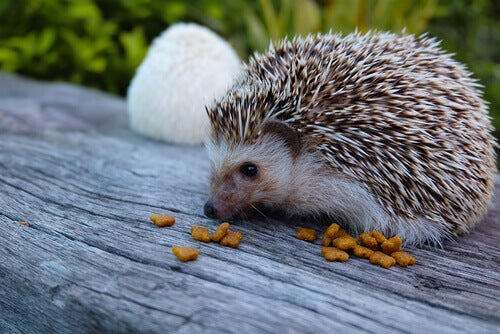 Wobbly Hedgehog Syndrome: What Is It?