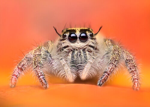 The Most Adorable Spiders in the Animal Kingdom