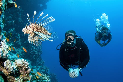 Scuba divers swimming with a lionfish.