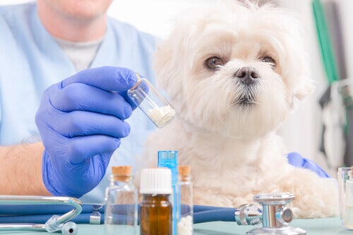 A veterinarian preparing medicine for a small dog.