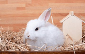 How to Choose and Look After a Rabbit