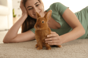 Making your home ready for your new rabbit.