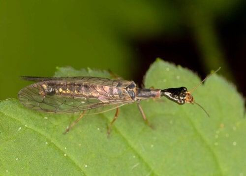 A bug on a leaf.