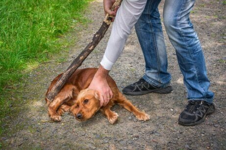 A dog being abused by their owner.
