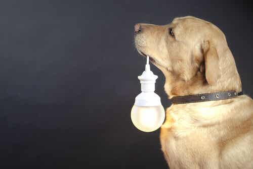 Luminous Collars for Stray Dogs